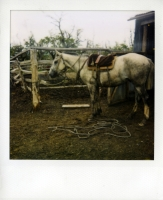 25_mollywoodwardpolaroids055.jpg