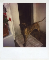 25_mollywoodwardpolaroids079.jpg