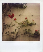 25_mollywoodwardpolaroids081.jpg