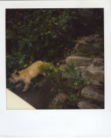 25_mollywoodwardpolaroids087.jpg