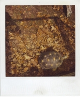 25_mollywoodwardpolaroids088.jpg